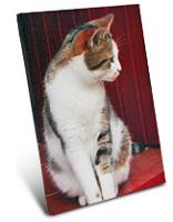 meinbilderkalender-foto